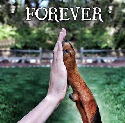 Forever IMG_6227